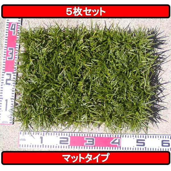 タマリュウ ・ 玉竜  (マット)|yamadanaeki-com