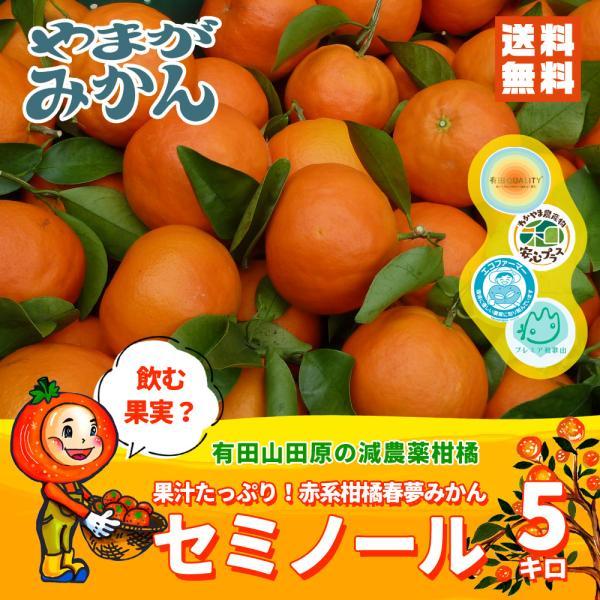 【送料無料】 春夢みかん セミノール 5kg