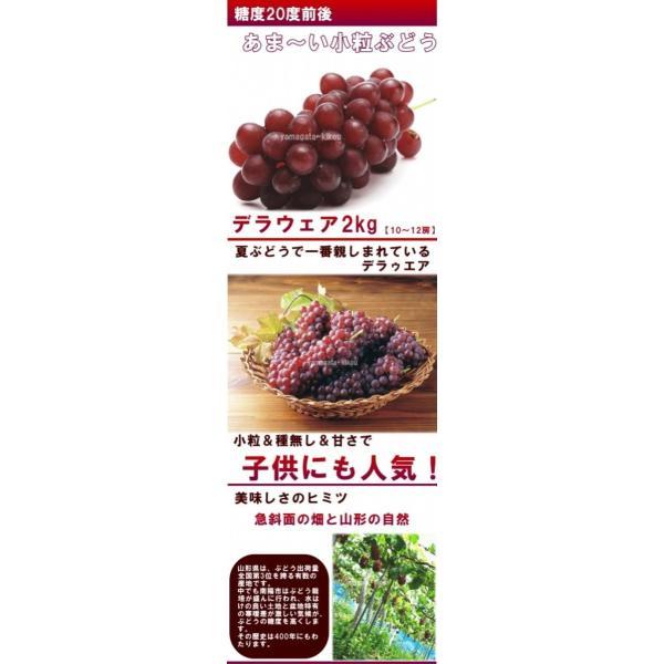 ぶどう デラウェア 送料無料 山形産 デラウェア 2kg(10〜12房) 秀品|yamagata-kikou|04