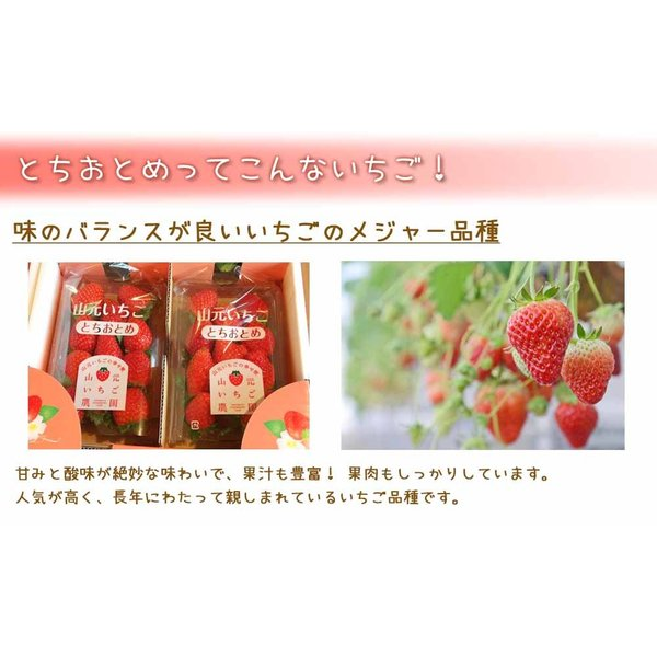 いちご とちおとめ 山元町産 朝摘みいちご4パック|yamamoto-ichigo15|03