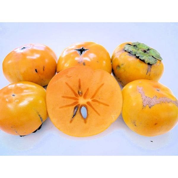 訳あり/カリッと美味しい次郎柿 3kg 【送料無料】和歌山産/愛知産
