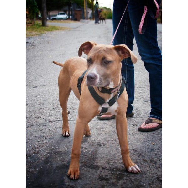 SALE50%OFF earthdog(アースドッグ)decorative hemp harnesses Sサイズ 小型犬用 中型犬用 ゆうパケット対応(1個まで) ykozakka 02