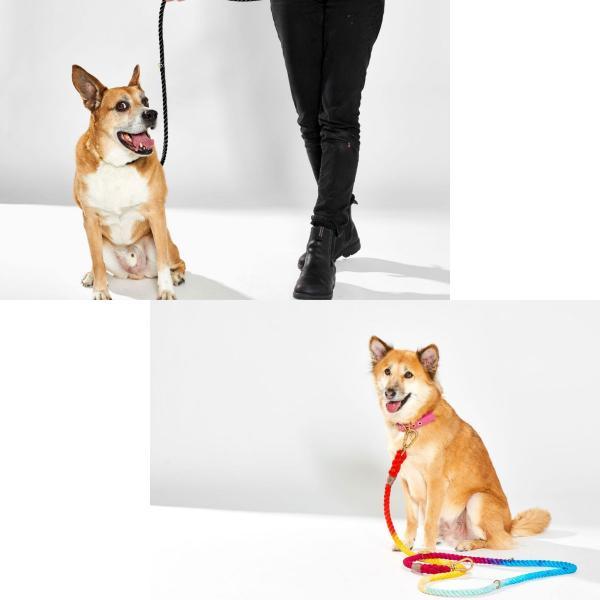 ファウンドマイアニマル ロープ リード FOUND MY ANIMAL アジャスタブル リーシュ オンブレ グラデーション 犬 猫 おしゃれ セレブ インポート 輸入 送料無料|ykozakka|14