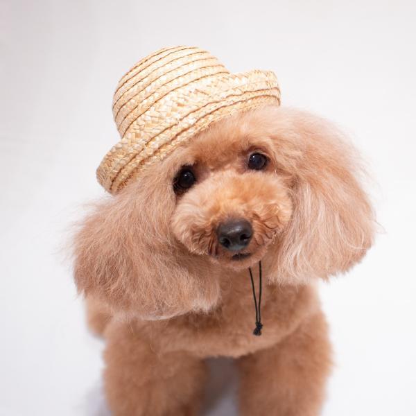 犬 帽子 麦わら カンカン帽 Sサイズ 撮影 紫外線対策 熱中症予防 2017SS ランキング入賞 ykozakka 05