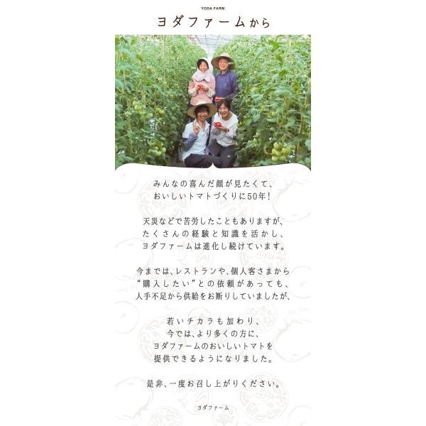 トマト 約1kg  安心安全 農家直販 ハウス桃太郎トマト ヨダファーム 採れたてを発送 送料無料 10月中下旬発送予定予約受付中 yodafarm 16