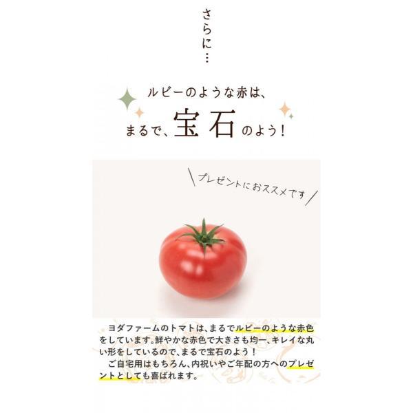 トマト 約1kg  安心安全 農家直販 ハウス桃太郎トマト ヨダファーム 採れたてを発送 送料無料 10月中下旬発送予定予約受付中 yodafarm 10