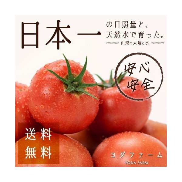 トマト 約2kg  安心安全 農家直販 ハウス桃太郎トマト ヨダファーム 採れたてを発送 10月中下旬発売予定 yodafarm
