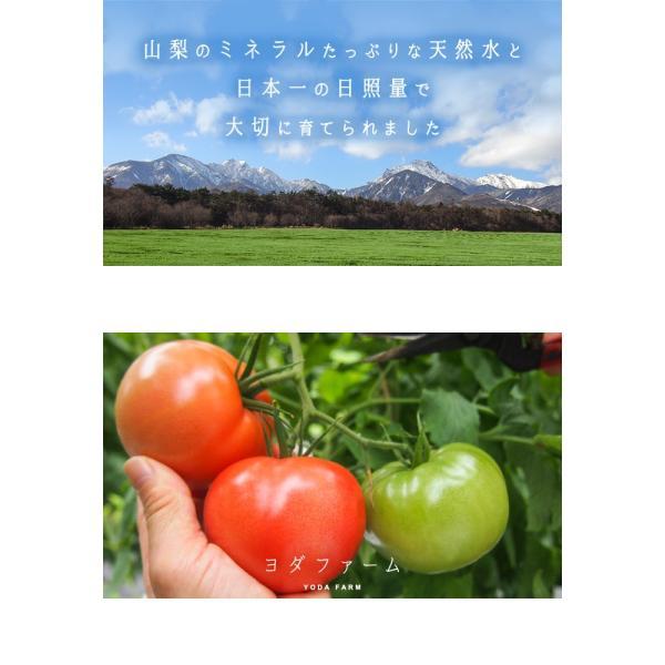 トマト 約2kg  安心安全 農家直販 ハウス桃太郎トマト ヨダファーム 採れたてを発送 10月中下旬発売予定 yodafarm 02