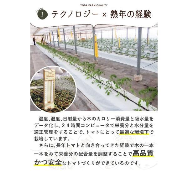 トマト 約2kg  安心安全 農家直販 ハウス桃太郎トマト ヨダファーム 採れたてを発送 10月中下旬発売予定 yodafarm 14