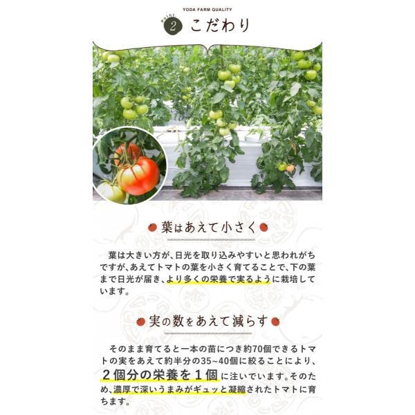 トマト 約2kg  安心安全 農家直販 ハウス桃太郎トマト ヨダファーム 採れたてを発送 10月中下旬発売予定 yodafarm 15