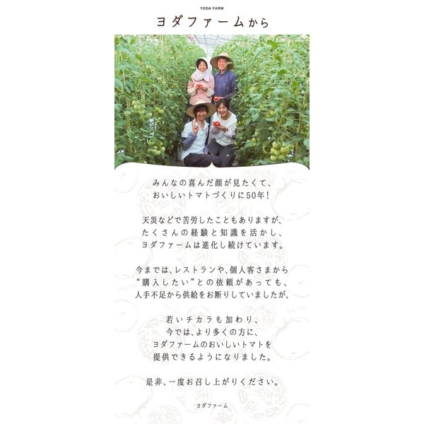 トマト 約2kg  安心安全 農家直販 ハウス桃太郎トマト ヨダファーム 採れたてを発送 10月中下旬発売予定 yodafarm 16