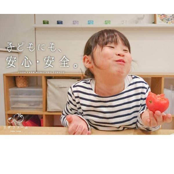 トマト 約2kg  安心安全 農家直販 ハウス桃太郎トマト ヨダファーム 採れたてを発送 10月中下旬発売予定 yodafarm 03
