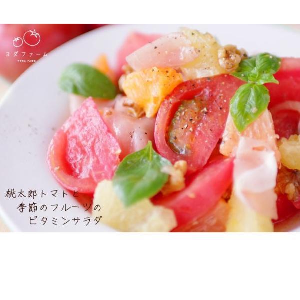 トマト 約2kg  安心安全 農家直販 ハウス桃太郎トマト ヨダファーム 採れたてを発送 10月中下旬発売予定 yodafarm 04