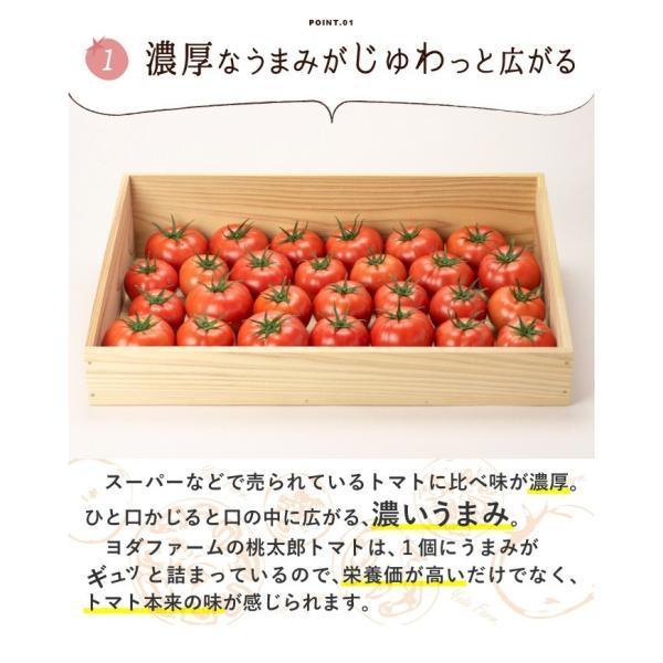 トマト 約2kg  安心安全 農家直販 ハウス桃太郎トマト ヨダファーム 採れたてを発送 10月中下旬発売予定 yodafarm 06