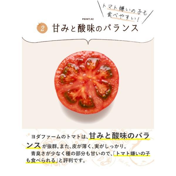トマト 約2kg  安心安全 農家直販 ハウス桃太郎トマト ヨダファーム 採れたてを発送 10月中下旬発売予定 yodafarm 07