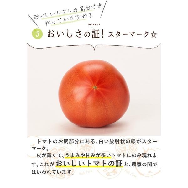 トマト 約2kg  安心安全 農家直販 ハウス桃太郎トマト ヨダファーム 採れたてを発送 10月中下旬発売予定 yodafarm 08