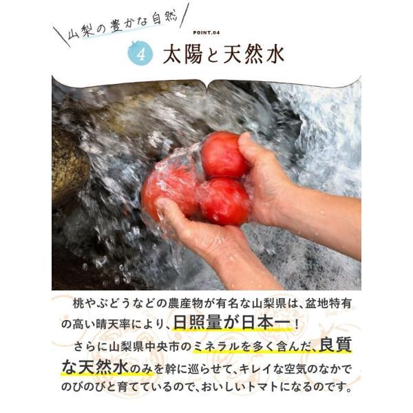 トマト 約2kg  安心安全 農家直販 ハウス桃太郎トマト ヨダファーム 採れたてを発送 10月中下旬発売予定 yodafarm 09