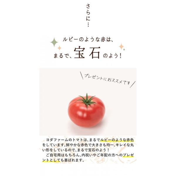 トマト 約2kg  安心安全 農家直販 ハウス桃太郎トマト ヨダファーム 採れたてを発送 10月中下旬発売予定 yodafarm 10