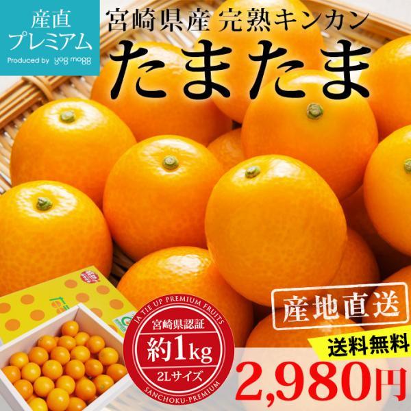 完熟きんかん たまたま 金柑 宮崎県 キンカン 約1kg Lサイズ 産地直送 送料無料|yogmogg