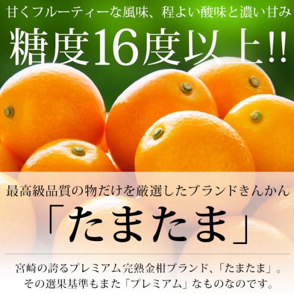 完熟きんかん たまたま 金柑 宮崎県 キンカン 約1kg Lサイズ 産地直送 送料無料|yogmogg|02