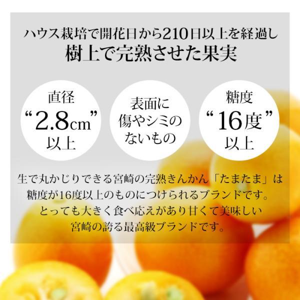 完熟きんかん たまたま 金柑 宮崎県 キンカン 約1kg Lサイズ 産地直送 送料無料|yogmogg|03
