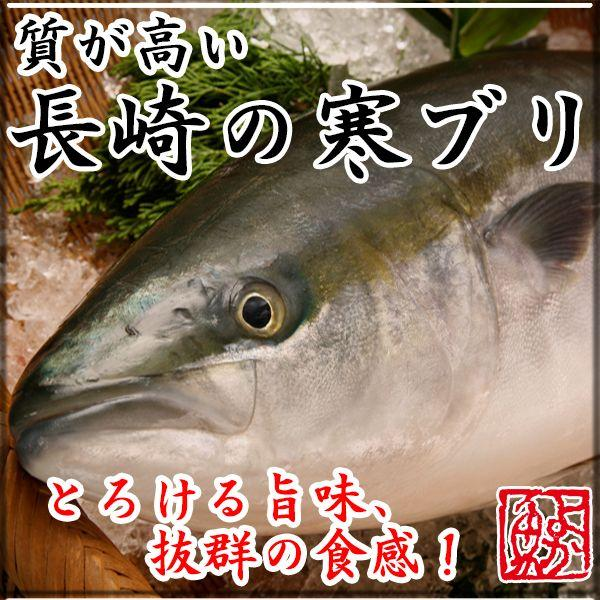 ギフト ブリ(半天然) 4.5kg前後1本 長崎産のたっぷり脂ののった旬の極上ブリ(極上ぶり) 九十九島鮮魚