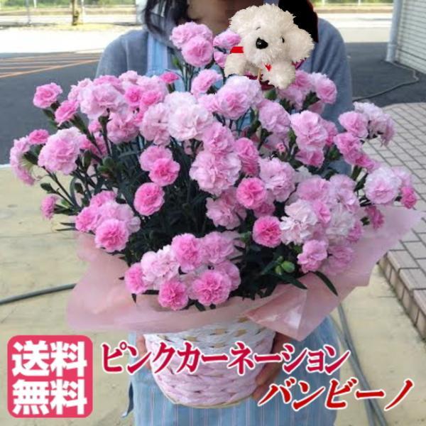 母の日 ギフト プレゼント ピンク カーネーション  バンビーノ バルーンピックつき 送料無料