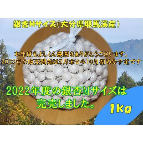 ぎんなんギンナン銀杏M(Lサイズ相当品)(大分県耶馬溪産)1kg