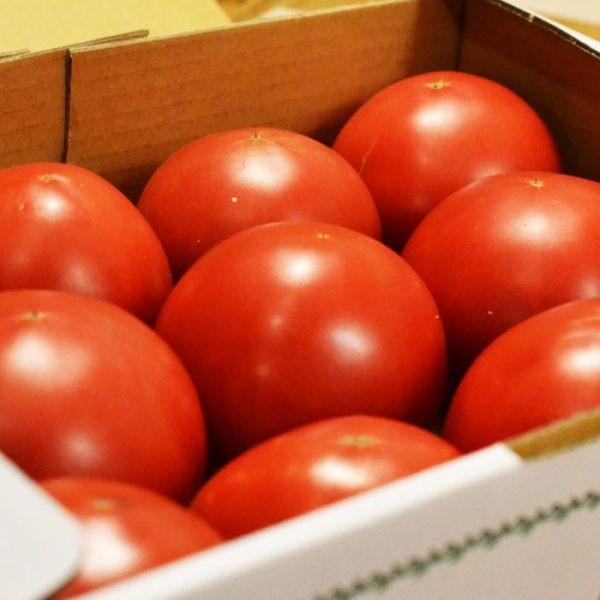 甘ちゃんトマト