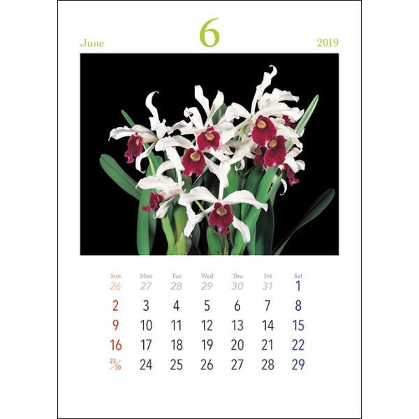 オリジナル洋蘭カレンダー(小)|yottekero|02