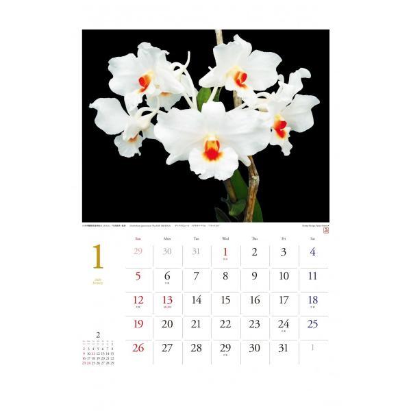 オリジナル洋蘭カレンダー(大)|yottekero|02