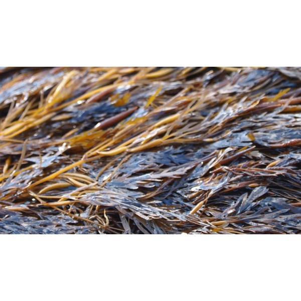 6月1日以降発送 国産海藻 あかもく(ギバサ) 宮城 冷凍 アカモク(キャップ・レシピ本付き) 90g×10袋(900g)|yourheimat|04