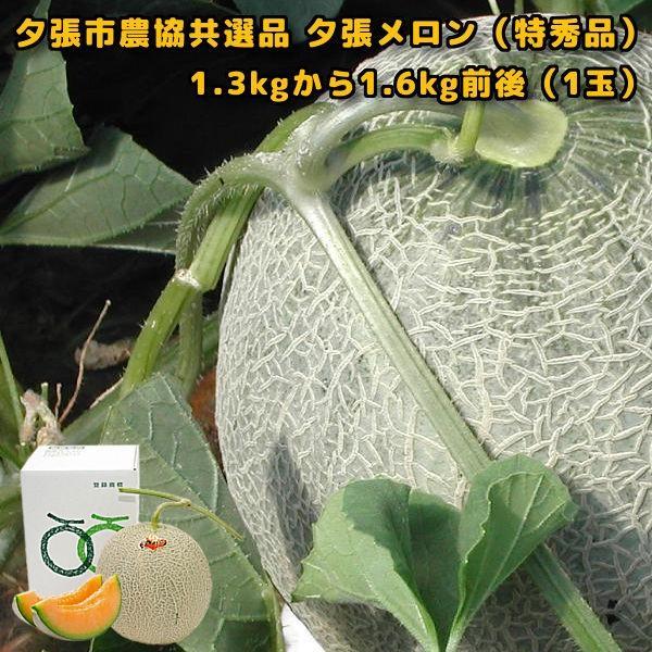 贈答品 ギフト 夕張メロン 夕張市農協 共選品 特秀品 1玉 1.3から1.6kg前後|yubari-shouten