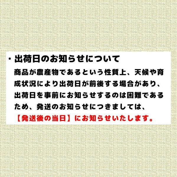 贈答品 ギフト 夕張メロン 夕張市農協 共選品 特秀品 1玉 1.3から1.6kg前後|yubari-shouten|06