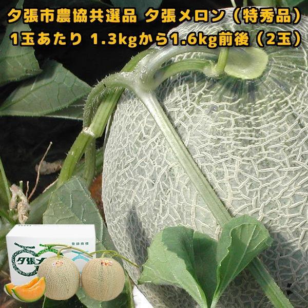 贈答品 ギフト 夕張メロン 夕張市農協 共選品 特秀品 2玉 1玉あたり 1.3から1.6kg前後|yubari-shouten