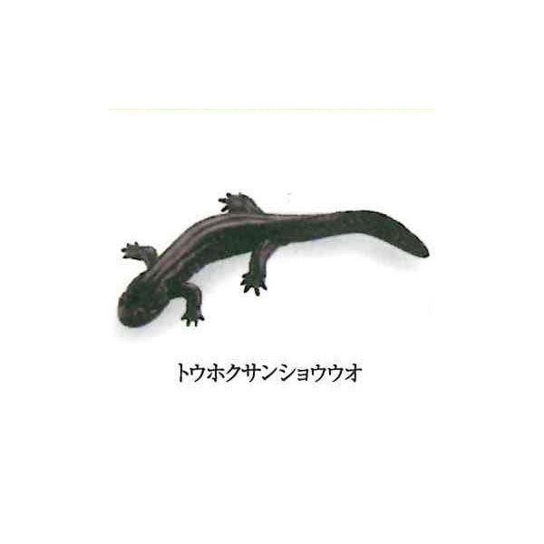 カプセルQミュージアム 日本の動物コレクション1 東北/北限のサル 6:トウホクサンショウウオ 海洋堂 ガチャポン