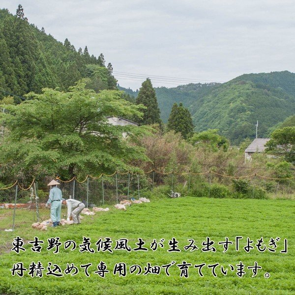 よもぎ 葉茶 国産 無農薬 で栽培しています 奈良東吉野産100%  90g入x5個セット 送料無料|zakka-yasan|04