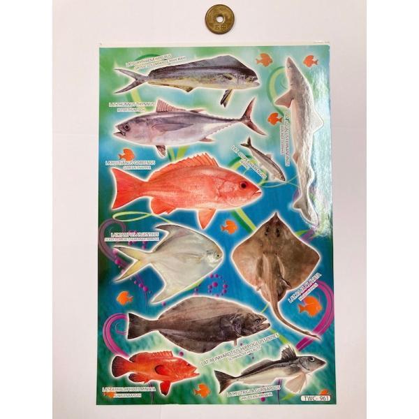 シール/リアル系シール サカナC 魚 さかな B5サイズのシート 図鑑風 アジア 英語表記
