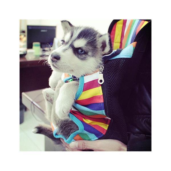 犬 抱っこひも ペット バッグ メッシュ 小型犬 大型犬 中型犬 おんぶ ペット用品 ペット用リュック 便利 お散歩 お出かけ ペット用品 猫 キャリーバッグ|zakzak|10