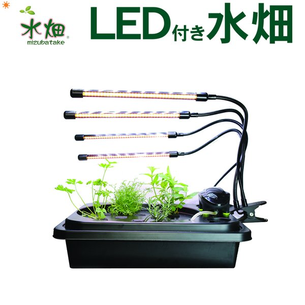 水耕栽培キット LED付き水畑 LEDタイプ 選択 白のLED4本または赤青のLED4本  水耕栽培 水栽培 家庭菜園 水耕栽培器 水畑
