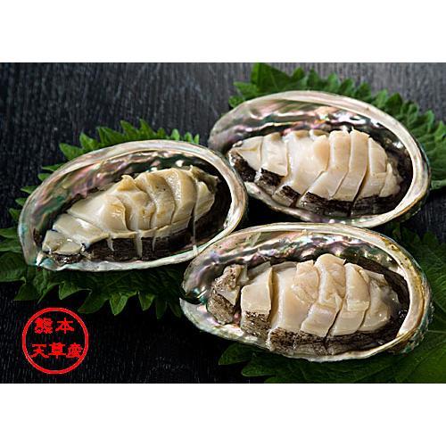 アワビ 活きあわび 約500g イルカウォッチングで有名な天草の海で育た栄養豊富な鮑 | 天草特産品ショップ|55net