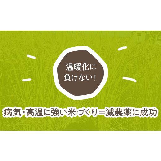 【令和2年度】国際総合部門金賞受賞 南魚沼産ぴかまる精米5kg|5602miwa|03