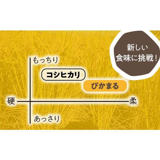 【令和2年度】国際総合部門金賞受賞 南魚沼産ぴかまる精米5kg|5602miwa|04