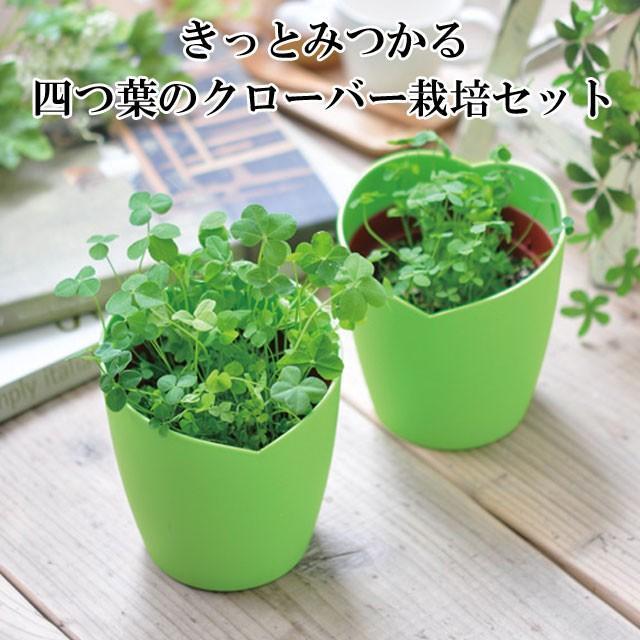 栽培セット きっとみつかる 四つ葉のクローバー 栽培キット 四つ葉 クローバー 栽培 植物 かわいい プレゼント グリーン インテリア 置物 グッズ|753nagomi