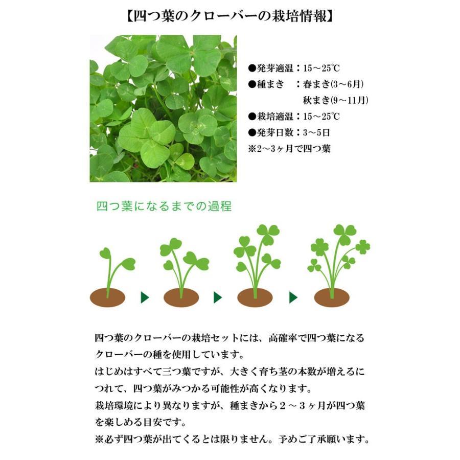 栽培セット きっとみつかる 四つ葉のクローバー 栽培キット 四つ葉 クローバー 栽培 植物 かわいい プレゼント グリーン インテリア 置物 グッズ|753nagomi|05