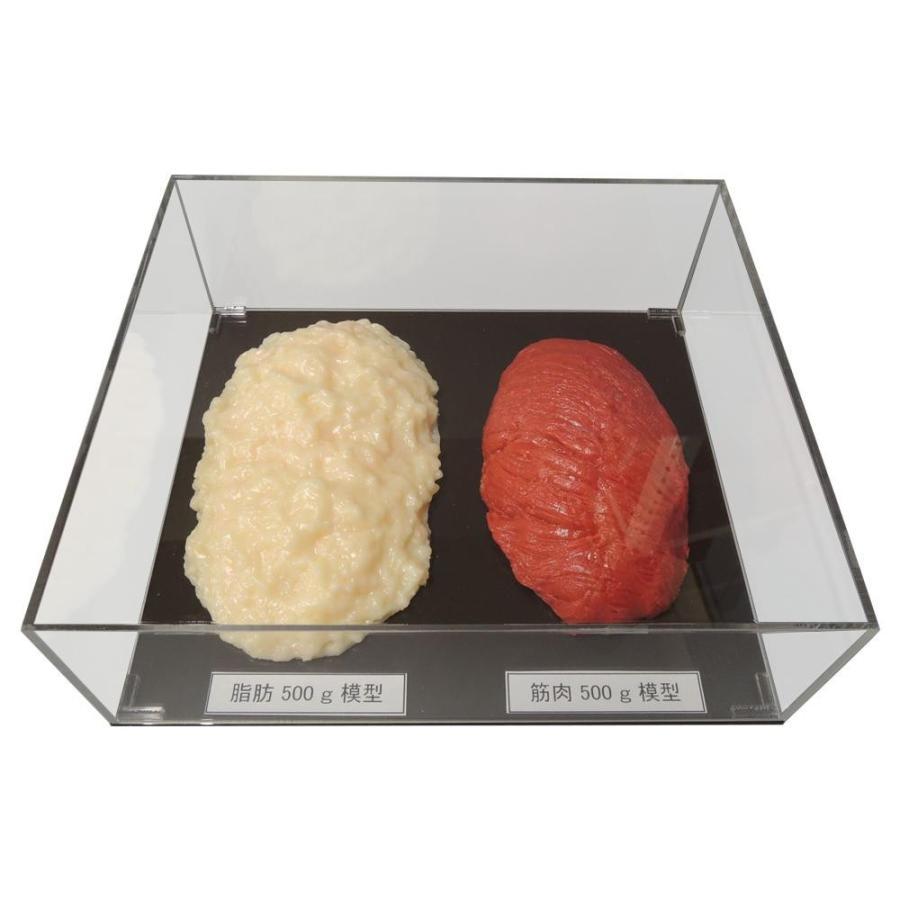 (送料無料)脂肪/筋肉対比セット(アクリルケース入)500g IP-981