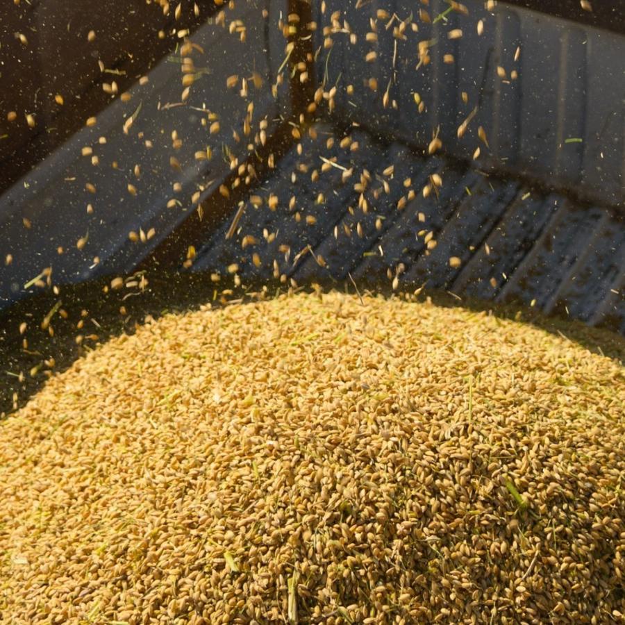 自宅用玄米(5kg×4) コシヒカリ 農林水産大臣賞受賞  / 玄米 お米 ご飯 20kg|agri-takimoto|03
