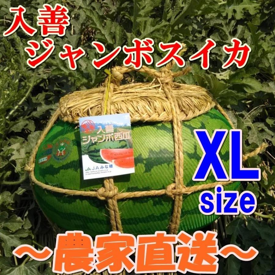 入善ジャンボスイカ XL(20キロ〜)  贈答用  / 果物 ギフト スイカ 西瓜 農家直送|agri-takimoto