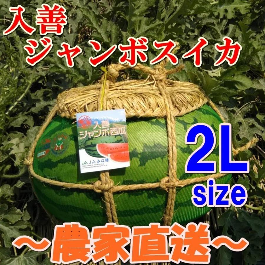 入善ジャンボスイカ 2L(14~16キロ)  贈答用  / 果物 ギフト スイカ 西瓜 農家直送|agri-takimoto