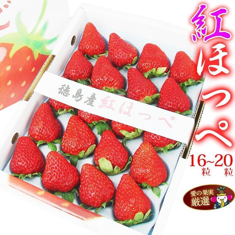 イチゴ 苺 果物 くだもの フルーツ【厳選 大粒 いちご】 【紅ほっぺ(徳島産)16〜20粒】 aino-kajitu